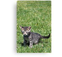 Ratchet the Kitten Canvas Print
