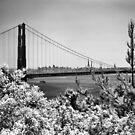 The Golden Gate Bridge from Battery Wagner by Rodney Johnson