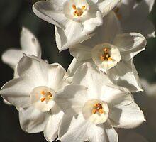 Still spring by loiteke