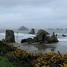 Fog Rolling In...Bandon Beach...Oregon by trueblvr