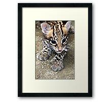 Ocelot Cub Framed Print