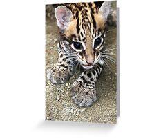 Ocelot Cub Greeting Card