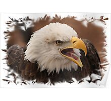Bald Eagle framed. Poster