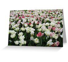 Pretty Pink and White Tulips - Keukenhof Gardens Greeting Card