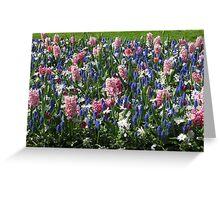 Pink Hyacinths and Blue Muscari - Keukenhof Gardens Greeting Card