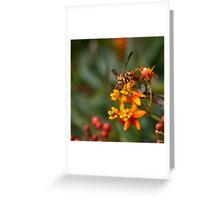 Wasp on milkweed Greeting Card