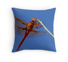 Male Flame Skimmer Dragonfly Throw Pillow