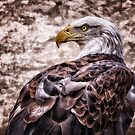 Bald Eagle by Keri Harrish