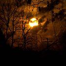 Into the night by Jaysen Edgin