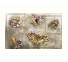 Variegated Fritillary ( Euptoieta Claudia) Days of May Art Print