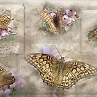 Variegated Fritillary ( Euptoieta Claudia) Days of May by Carmen Holly