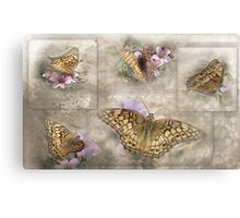Variegated Fritillary ( Euptoieta Claudia) Days of May Canvas Print