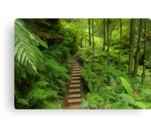 Pathway of ferns Canvas Print
