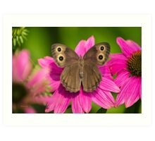 Pretty Butterfly with Flowers Art Print