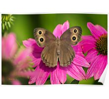 Pretty Butterfly with Flowers Poster