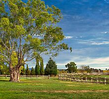 A Very Vale View - McLaren Vale, Southern Vales, South Australia by Mark Richards