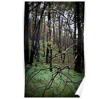 Stringy Bark Forest, Norton Summit Poster