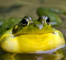 Ribbit Frog Sticker
