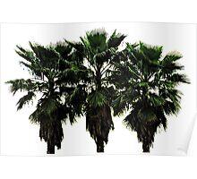 Whispering Palms Poster