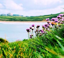 Sea Thrift by Rob Booth