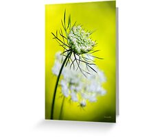 Queen Anne's Lace Flower Art Greeting Card