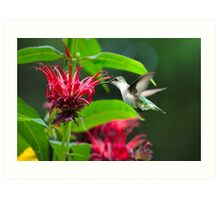 Backyard Hummingbird Art Print