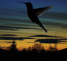 Evening Hummingbird by Al Bourassa
