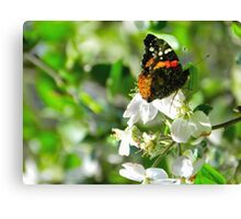 hope {apple blossom time} Canvas Print