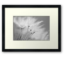 Black and White Dandelion with Water Droplets Framed Print