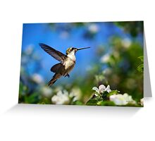 Beautiful Hummingbird in Flight Greeting Card