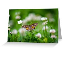 Northern Crescent Butterfly Art Greeting Card