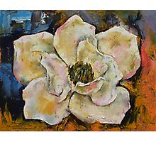 Magnolia Photographic Print