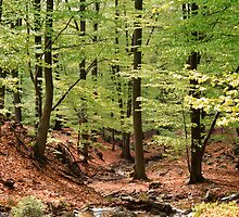 Beech forest on a fine spring day by intensivelight
