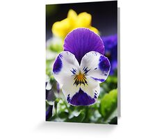 Pansy Greeting Card Greeting Card