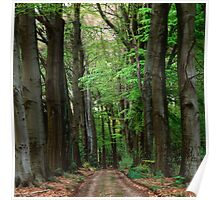 Forest lane in summer Poster