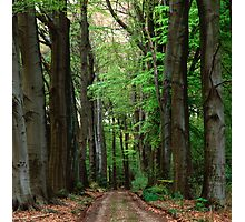 Forest lane in summer Photographic Print
