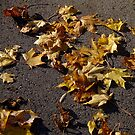 Autumn street by Bluesrose