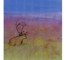 Caribou on the Tundra Photographic Print