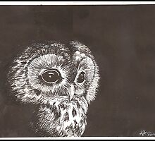 Night Owl by Kat Anderson