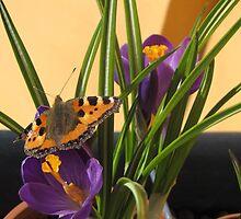 Balcony Butterfly by ArtOfE