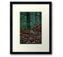 Trapped in Fall Framed Print