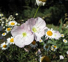 Pretty Pink Flowers with Daisy flowers by ack1128