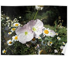 Pretty Pink Flowers with Daisy flowers Poster