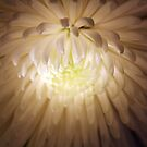 Floral Downlighter by dgscotland