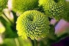 Mini Topiary by dgscotland