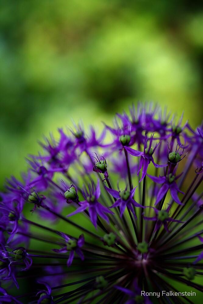 Wellspring of beauty #5 by Ronny Falkenstein