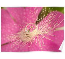 Wild Flower Dandelion Drops Poster