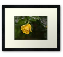 Even the Gloomiest Day Brings Beauty and Joy Framed Print