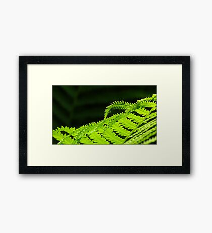 Swaying In The Sunlight Framed Print