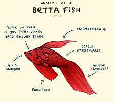 Anatomy of a Betta Fish by Sophie Corrigan